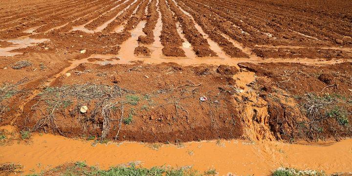 tarım arazileri